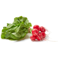 Fresh Organic Red Radishes, Locally Grown